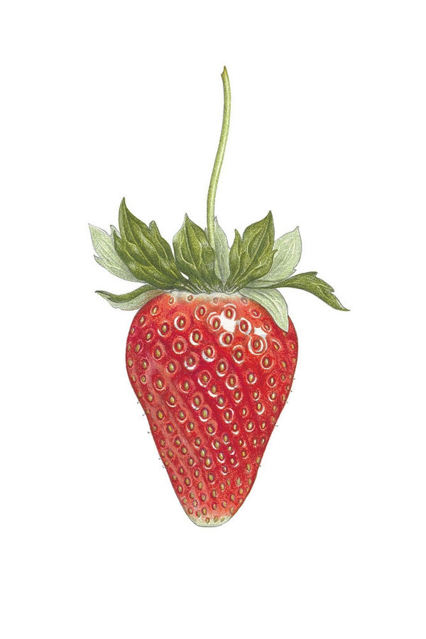 Long Stem Strawberry main1