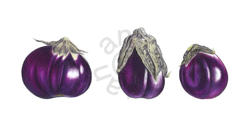 Aubergine Trio main