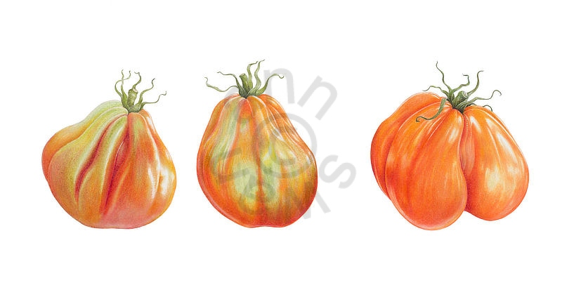 Italian-Tomatoes-main-test