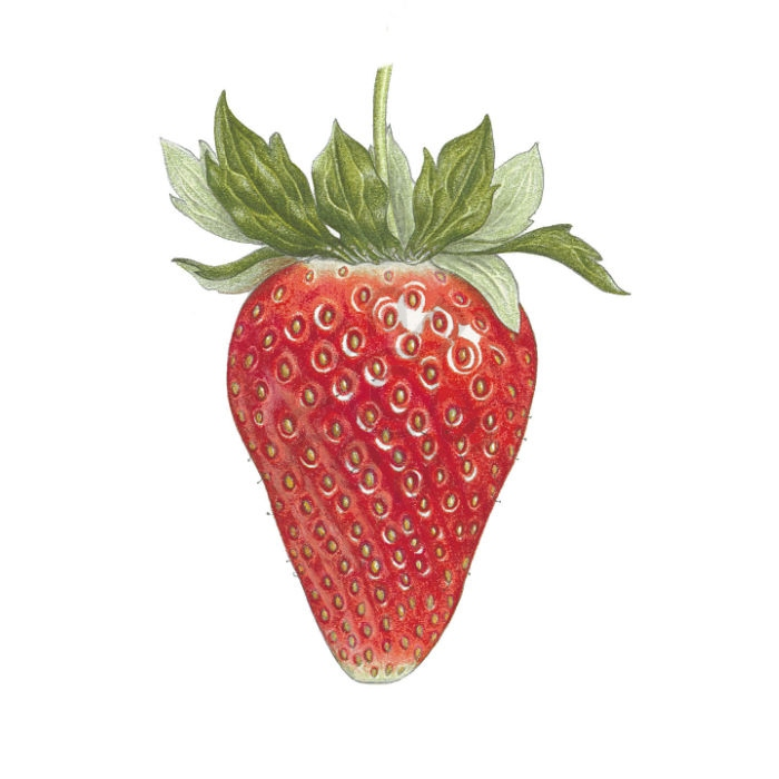 Strawberry main