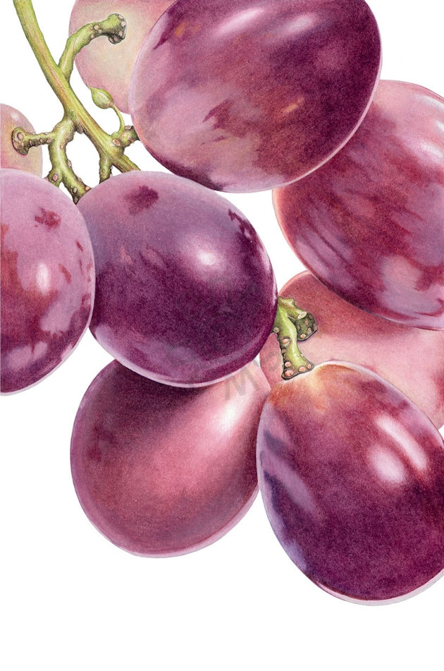 muscatel-grapes-main