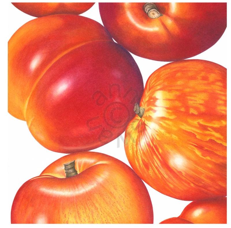 Nectarine-largerthanlife-square-card