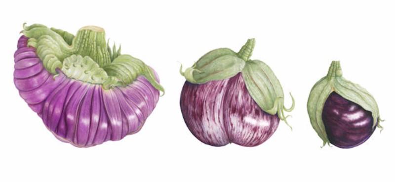 aubergine-trio-small