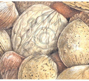 Mixed Nuts Notecard