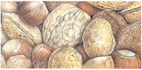Mixed Nuts Notecard