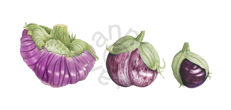 Heirloom Aubergines main