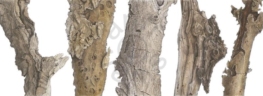 bark-quintet