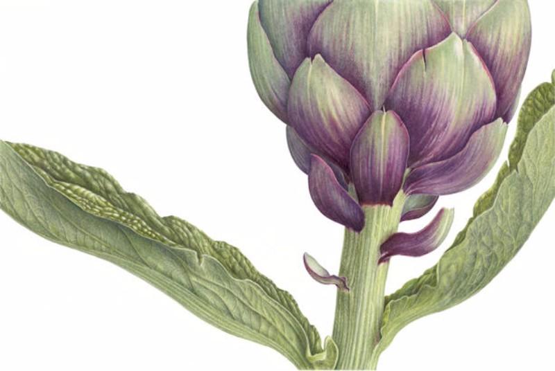 artichoke-small-image