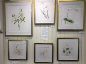 Trip To Wellesley Botanic Gardens Ann Swan