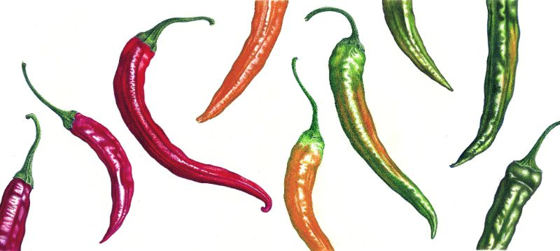 Chillies card image