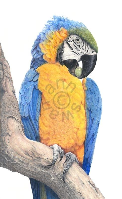 parrot fin web