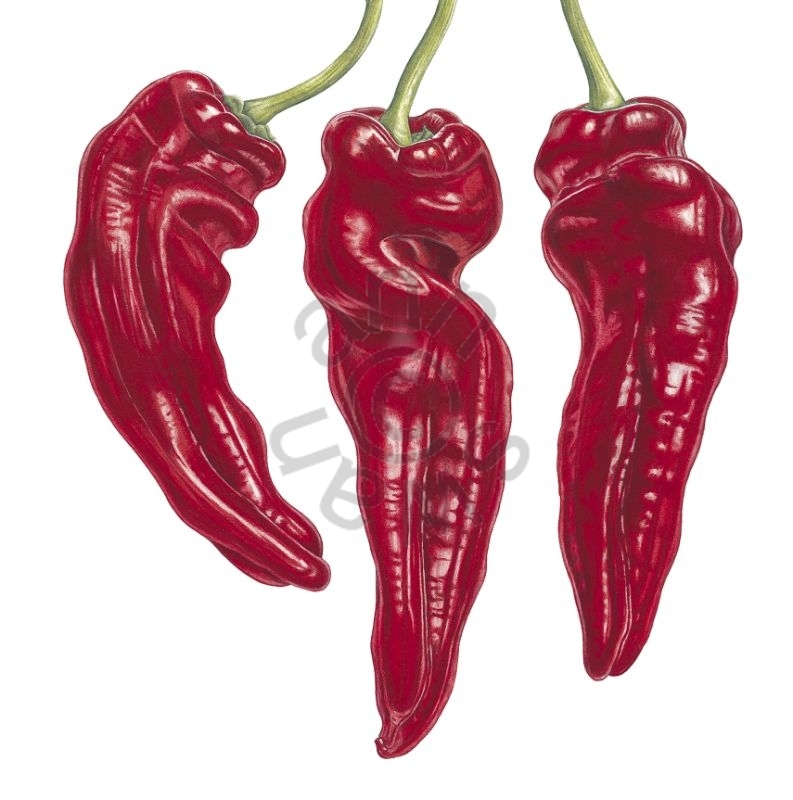 Red Chilli Trio